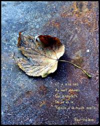 "Photo Credit: <a href=""http://www.flickr.com/photos/68986342@N00/2941852777/"">philwirks</a> via <a href=""http://compfight.com"">Compfight</a> <a href=""http://creativecommons.org/licenses/by-nd/2.0/"">cc</a>"